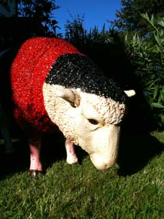 Alf Ramsey Sheep