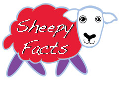 Sheepy Facts